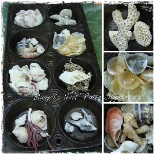 Sanibel Island Shells