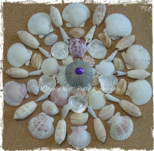 Sanibel She Shells (2)