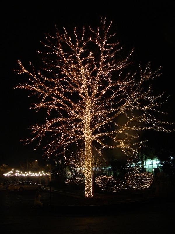 Merrifield Gardens Tree Of Light 2 Magpie 39 S Nest Patty Szymkowicz