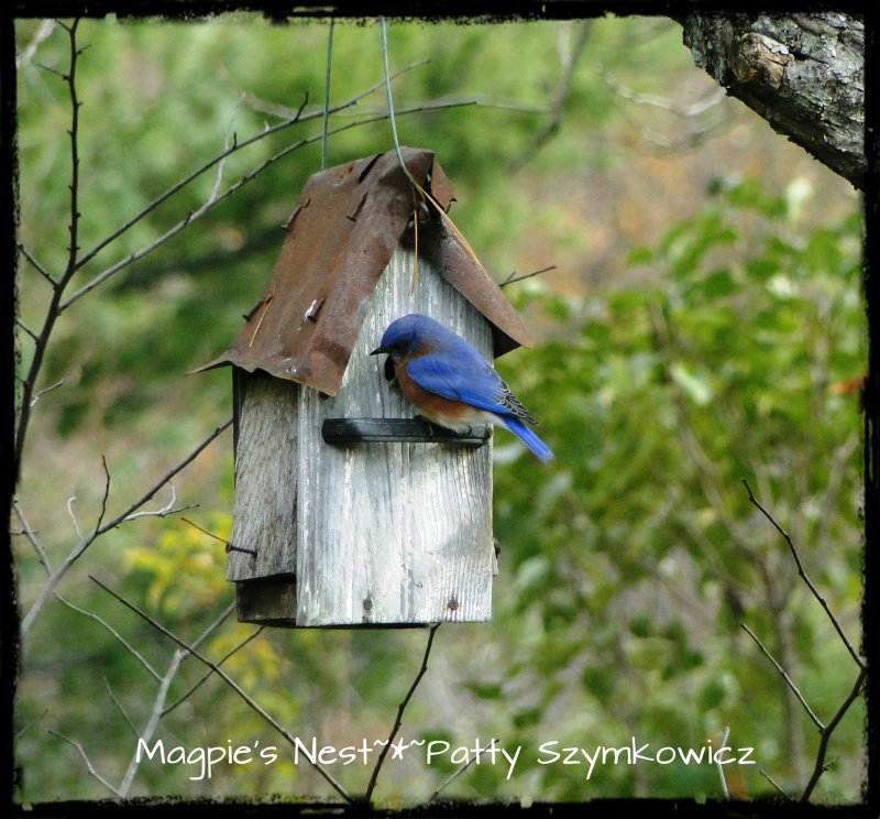 Magpies Nest Bluebird of Happiness House