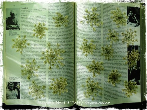 Queen Anne's Lace in book