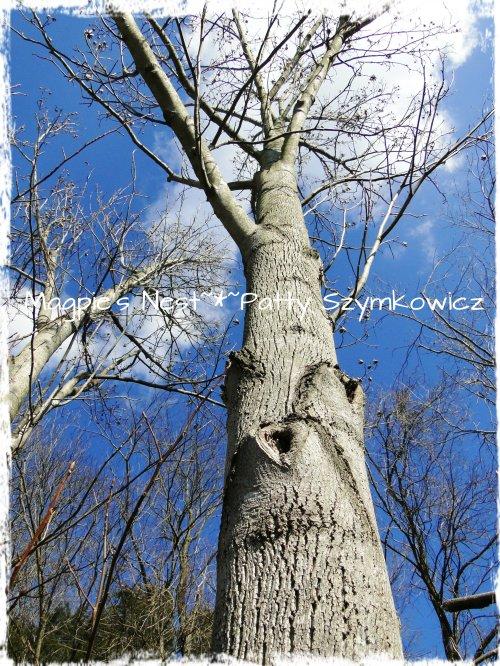 15 Feb 13 Heart Tree Trunk (2)
