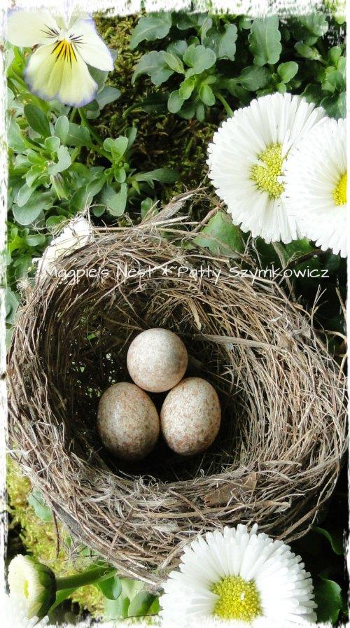 Wren nest and eggs