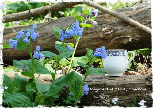 Bluebell Woods T Cup