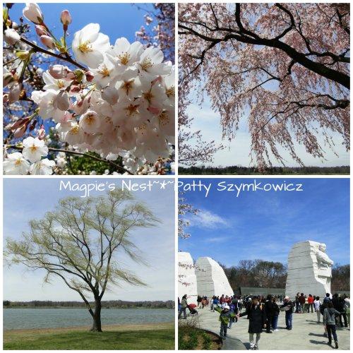 Cherry Blossoms 7 Apr 13