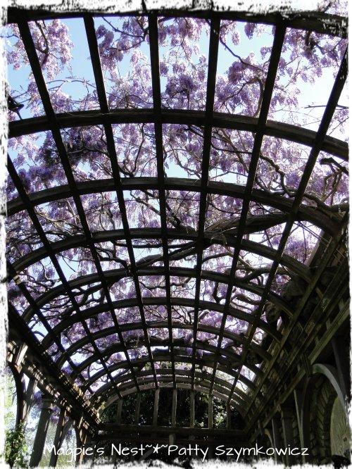 Crystal Terrace Wisteria Arbor