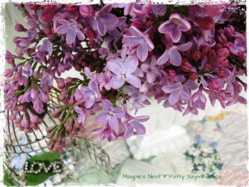 Lilac Tea Time (5)