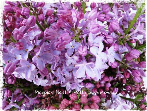 Lilac Tea Time