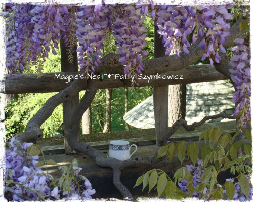 Wisteria with a view