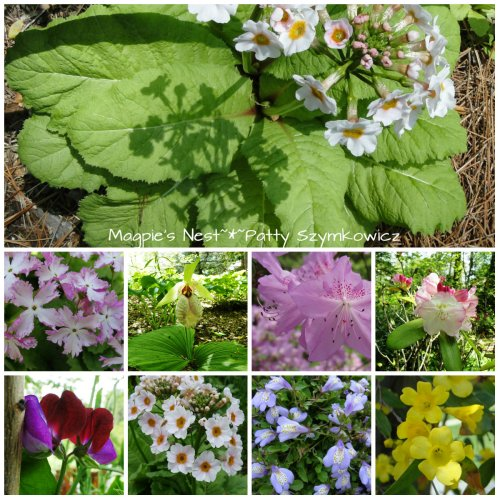 Chanticleer Blooms Sampler