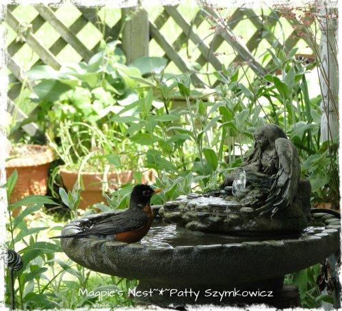 Patty Szymkowicz Robin in Angel Fountain