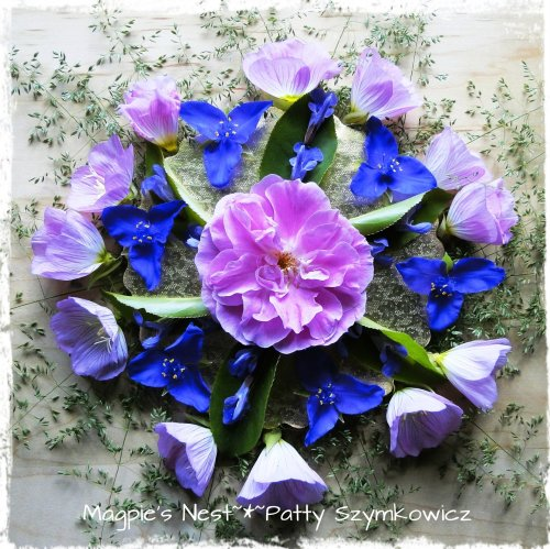 Patty Szymkowicz Spiderwort Evening Primrose Mandala (2)