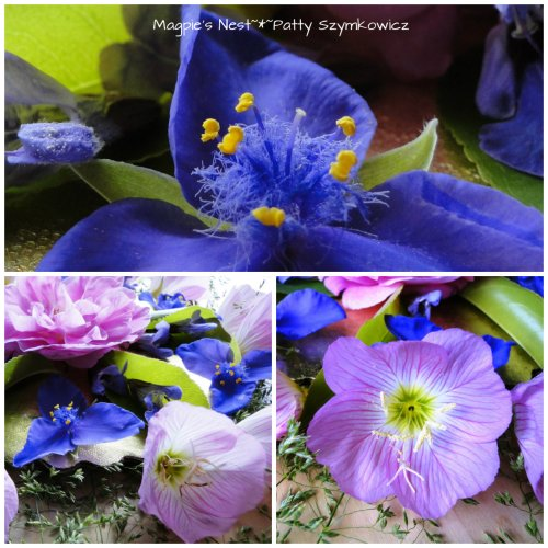Patty Szymkowicz Spiderwort Evening Primrose Mandala
