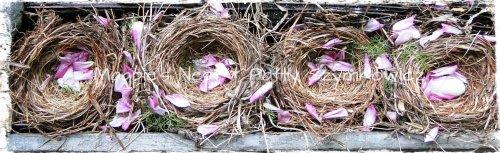 Robin's Nests 4