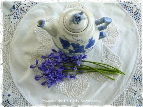 Spanish Bluebell T