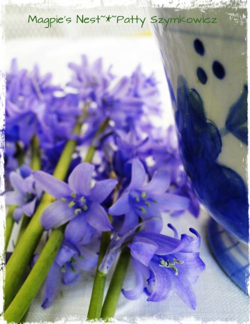 Spanish Bluebells 2