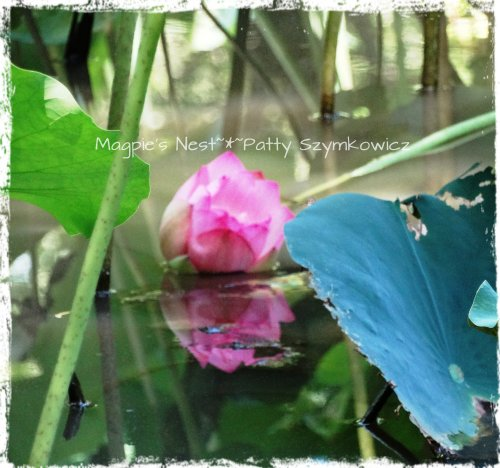 blurry lotus reflection