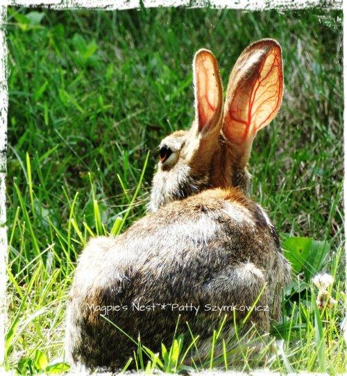 DSC03043 Bunny ears in the sun