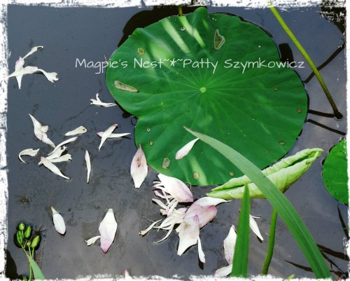 Fallen Lotus Petals