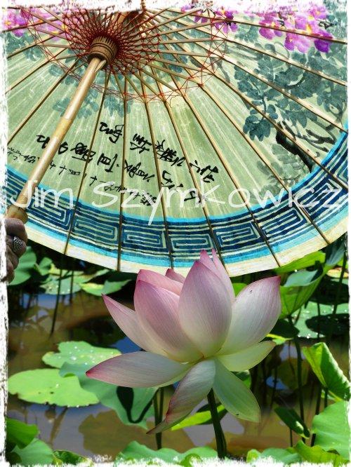 Jim Szymkowicz Paper Parasol Lotus