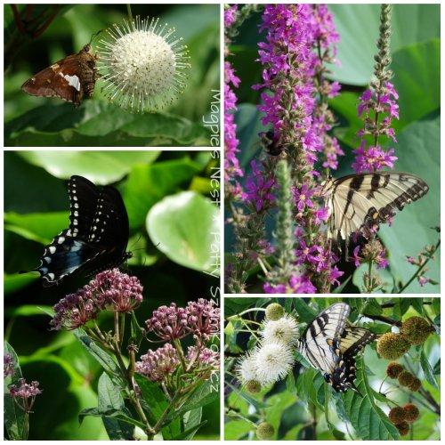July Butterfly Sampler