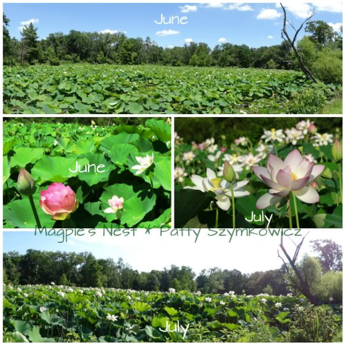 June and July visit contrast