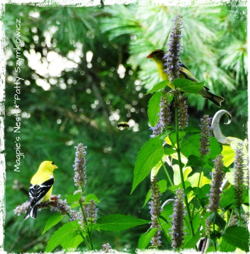 Mr & Mrs Goldfinch with Bee in the middle