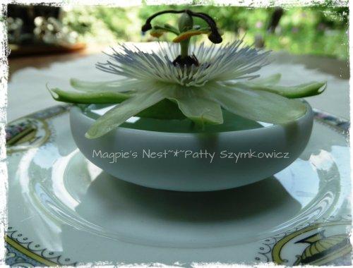 Passiflora Passion Flower (2)
