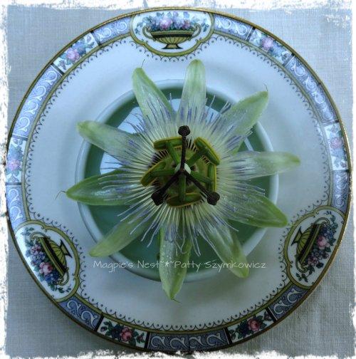 Passiflora Passion Flower (3)