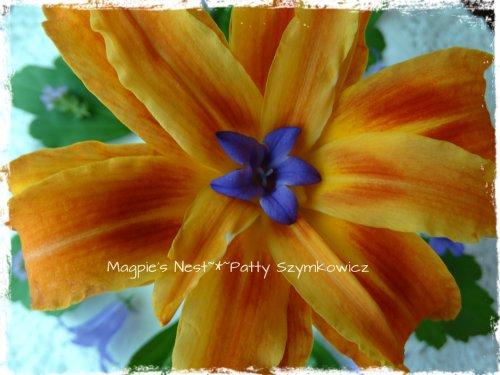 Tiger Lily Mandala