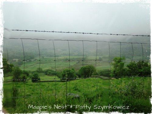 #13 Ireland near Molly Gallivans