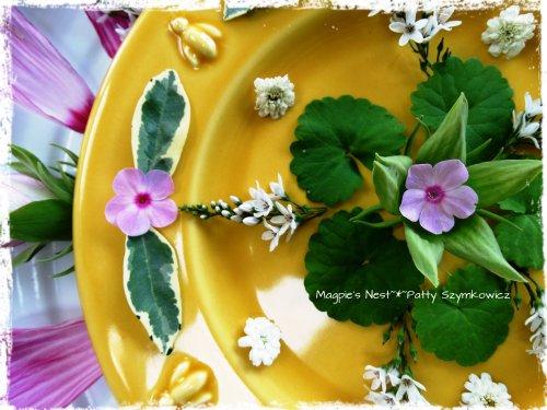 Hibiscus Mandala