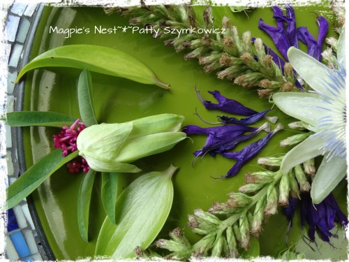 Liatris Passion Flower Mandala (1)