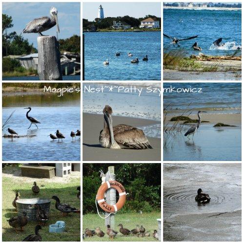 Ocracoke Island Birds
