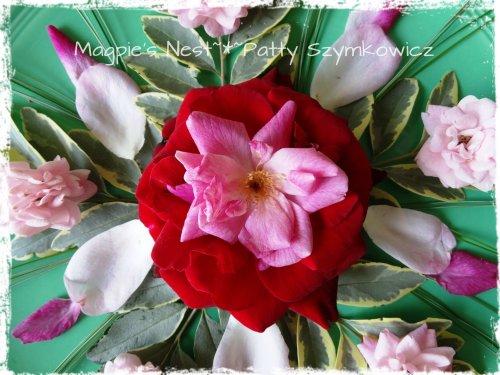 Sept Roses (3)