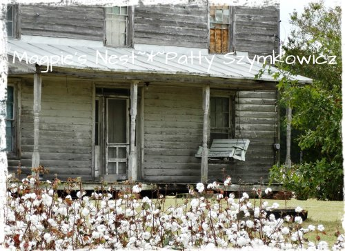 Cotton field Rt 32 NC (2)