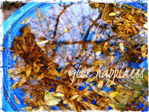 happiness birdbath