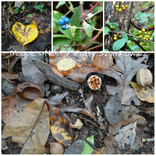 Hickory Nut Collage