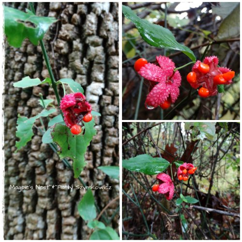 Mystery Fall berry in Walney Woods VA