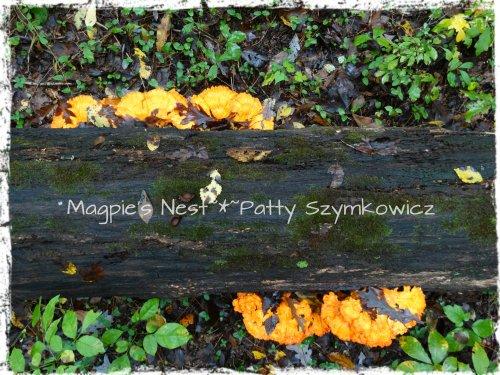 Walney Woods Fungi (1)