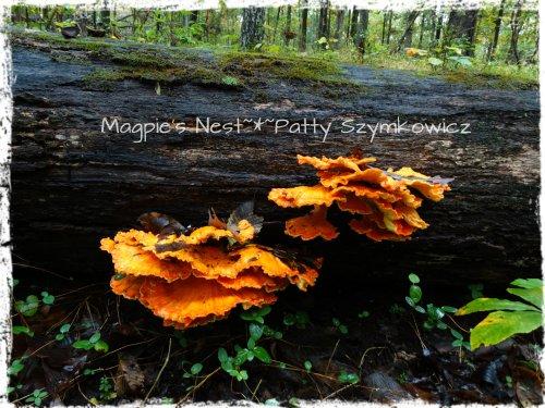 Walney Woods Fungi (2)