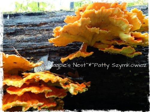 Walney Woods Fungi (3)