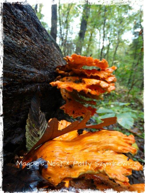 Walney Woods Fungi (4)