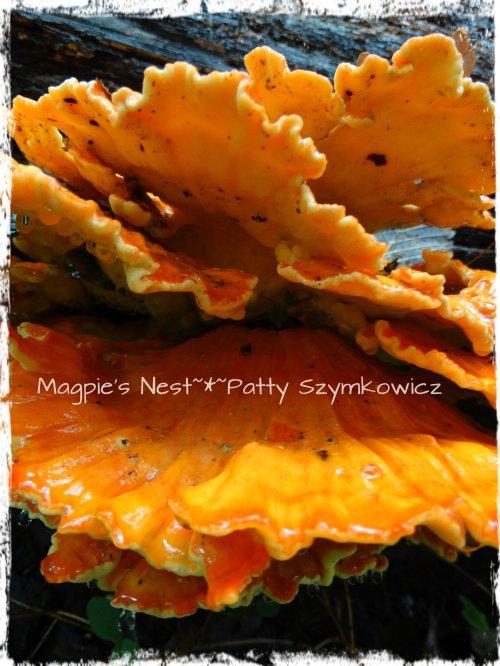 Walney Woods Fungi (5)