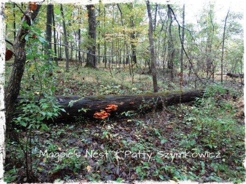 Walney Woods Fungi