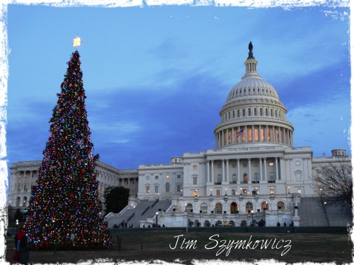 Washington DC Capitol Tree