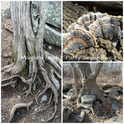 Roots and Fungi