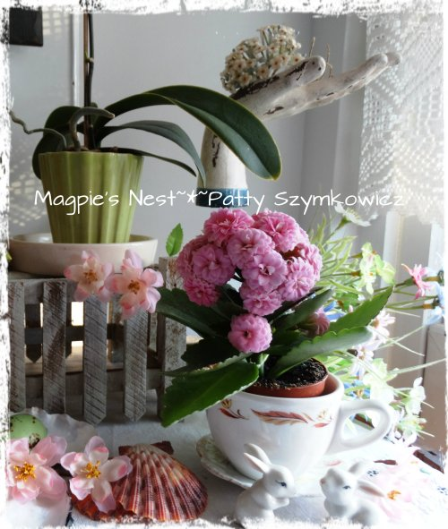 blooms with tea cup planter