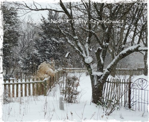 snowglobe in back garden