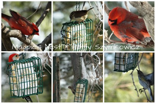 Suet Feeder Visitors